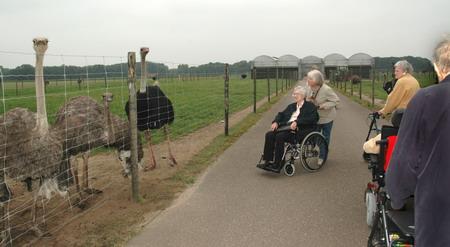 Van de staak struisvogelfarm - Saint maclou tapijt van gang ...